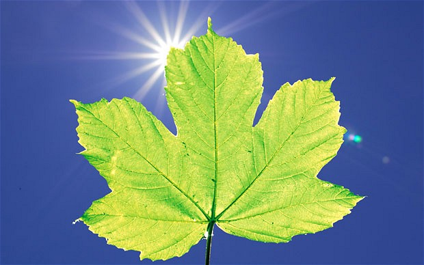 artificial-leaf