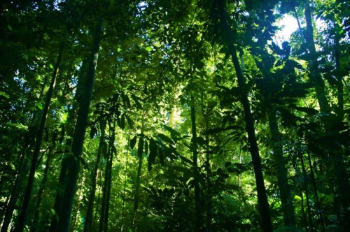 Indonesian Rainforests Safer Thanks To Recycled
