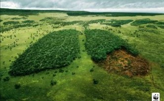 xforest-lungs-for-awareness-wwf-ad-campaign-shows-lung-patterns-cut-in-trees.jpeg.pagespeed.ic.QqDJM0RR-h