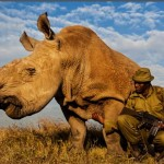 Sudan, the last male Northern White Rhinoceros on the planet, is now under 24-hour armed guard.