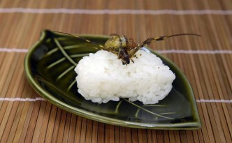 insect-sushi