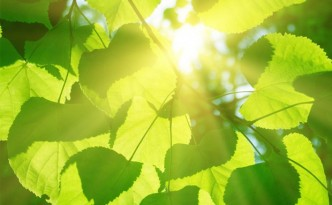 Artificial photosynthesis