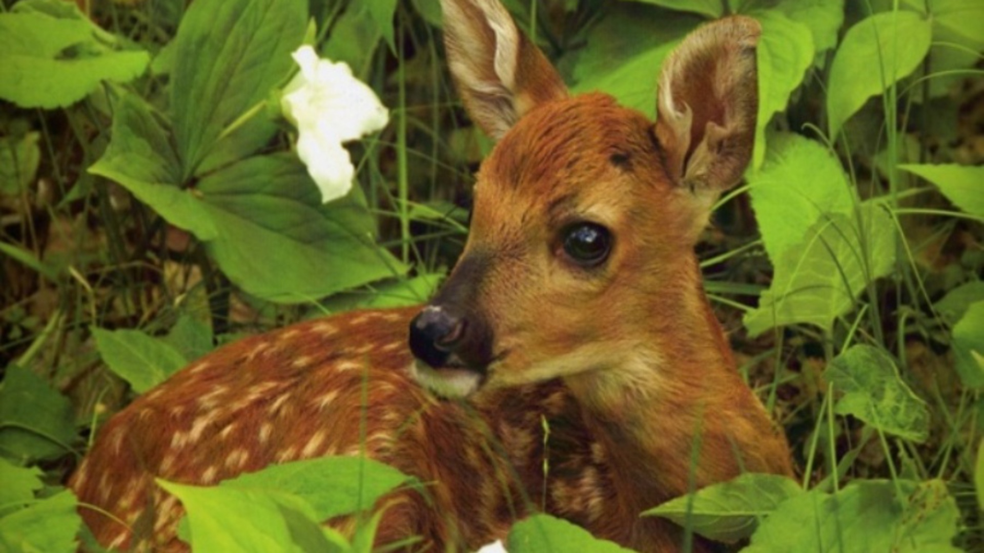 Deer Nature Animals Fawns Baby Animals Wallpapers Hd: How To Go Green In The City With DIY Urban Composting